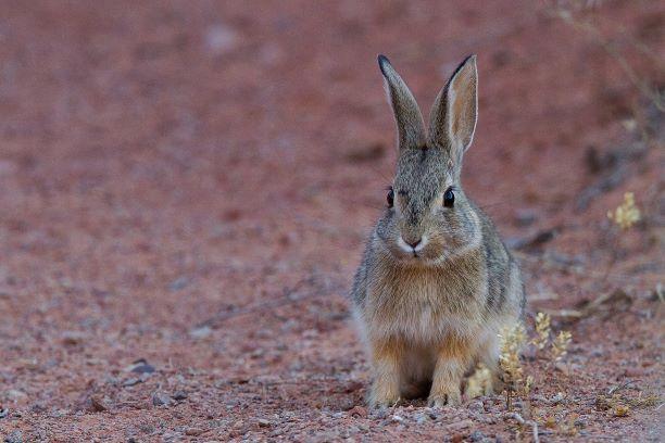 11 необычных фактов об обычных животных