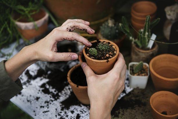 Грамотно выбираем комнатные растения