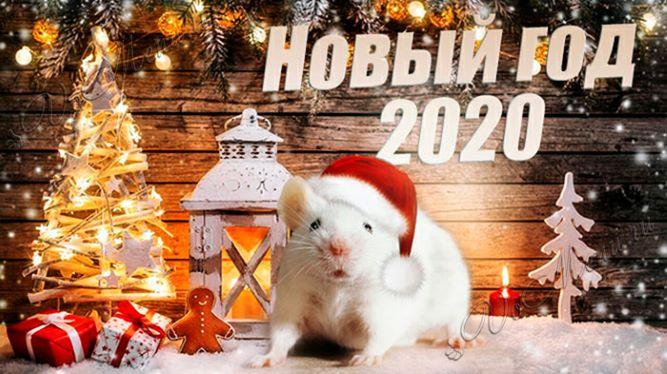 Новый 2020 год: чего ждать от Белой Металлической Крысы
